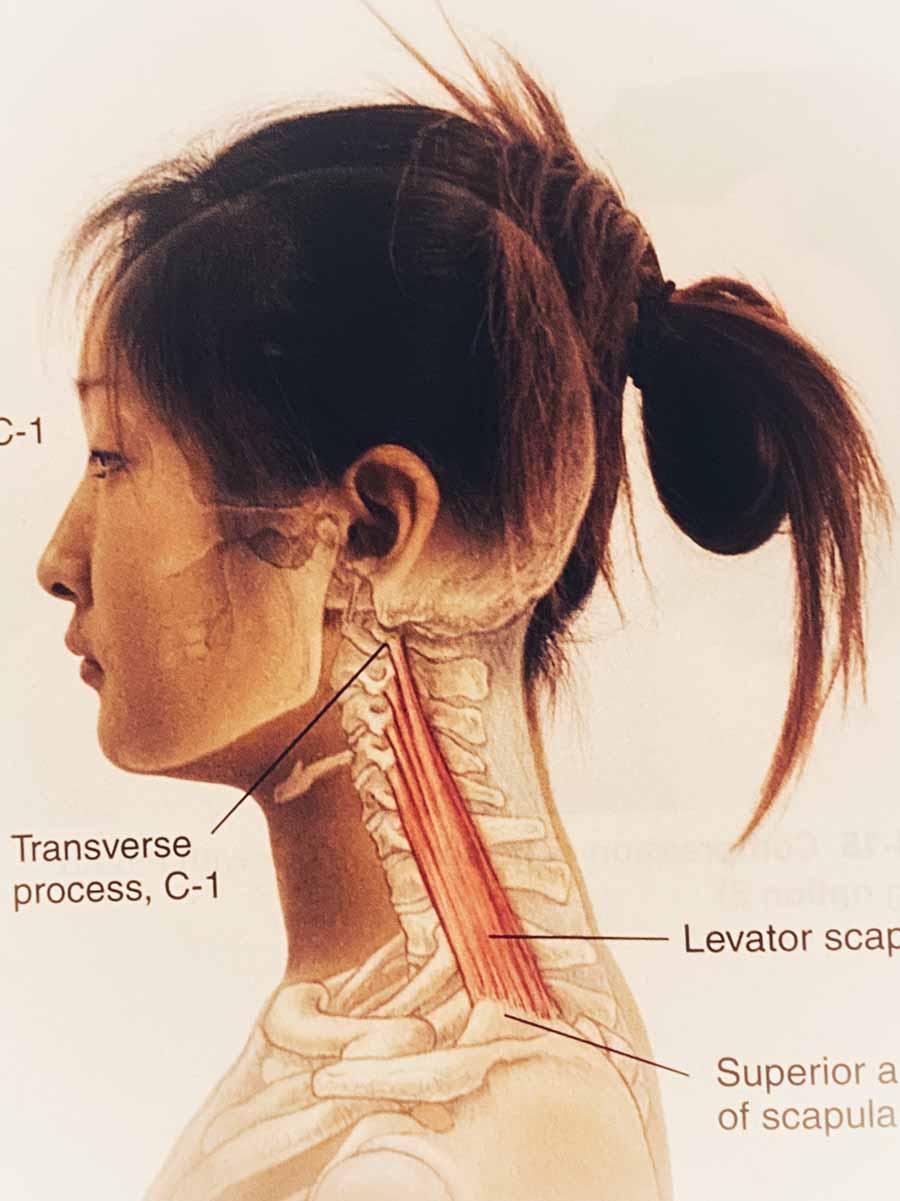 Rug nek schouder massage spieren nek